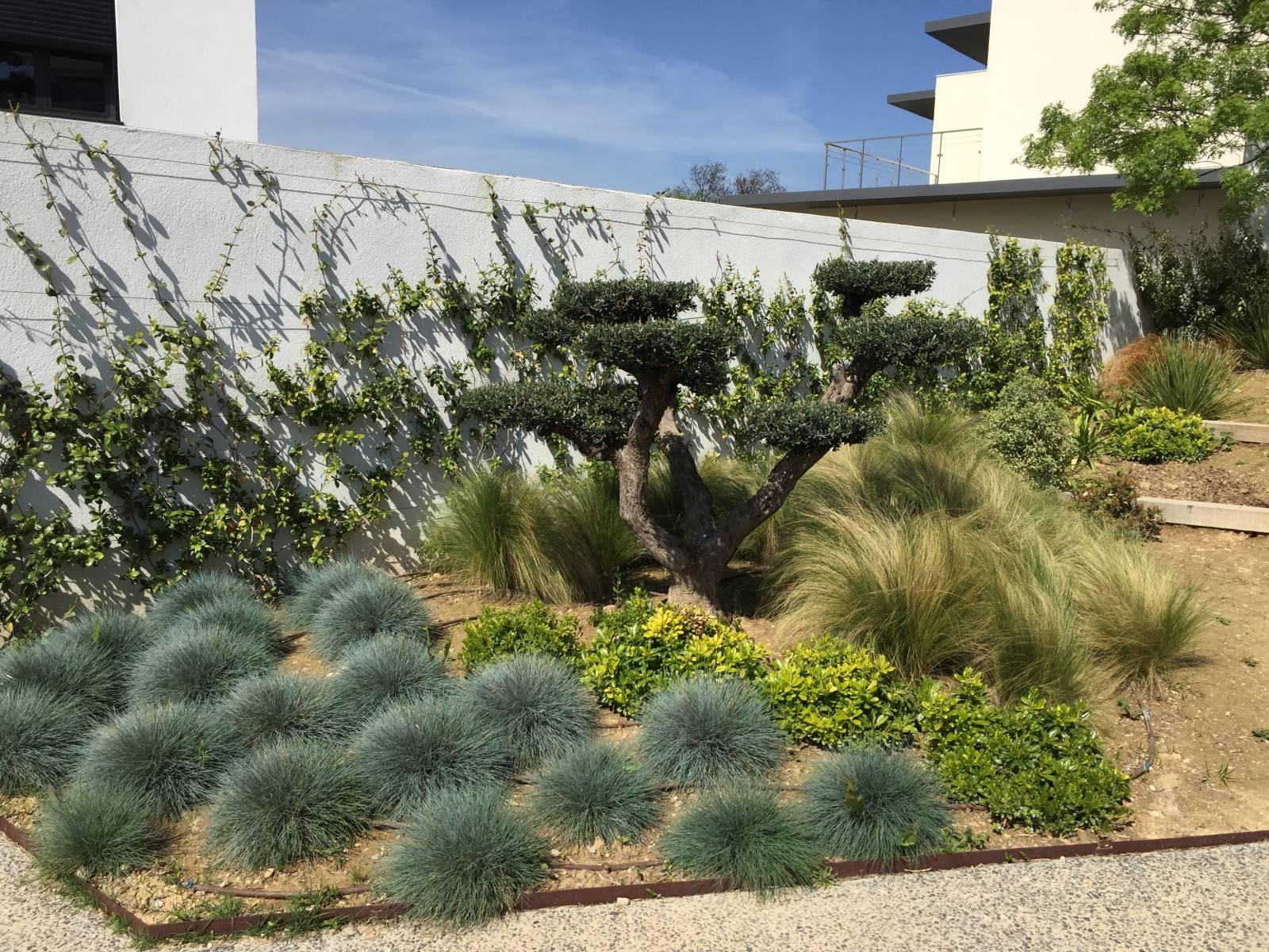 Am nagement jardins entretien espaces verts marseille for Entretien jardin 34