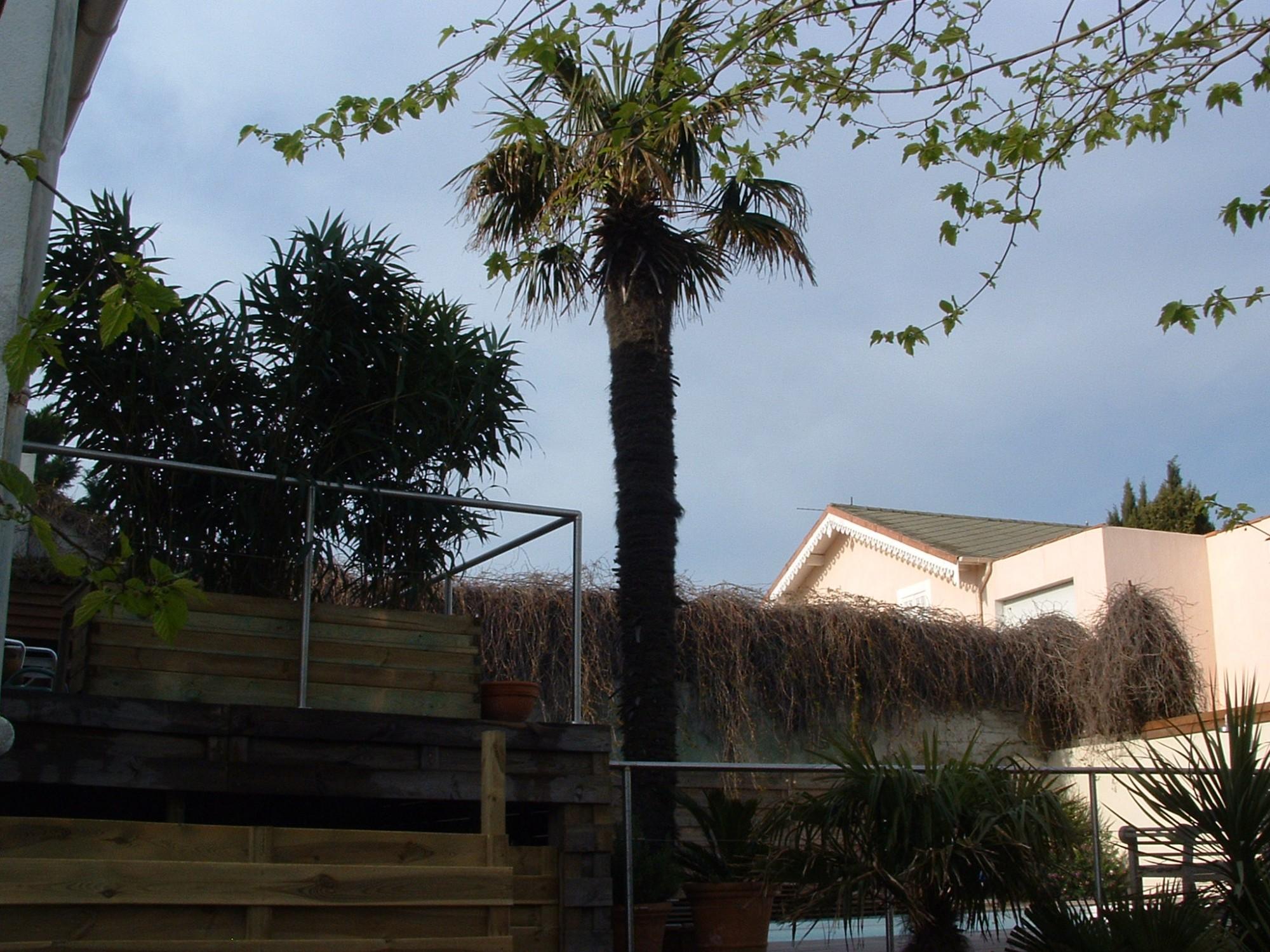 traitement phytosanitaire du paysandisia papillon qui d vaste les palmiers dans notre r gion. Black Bedroom Furniture Sets. Home Design Ideas
