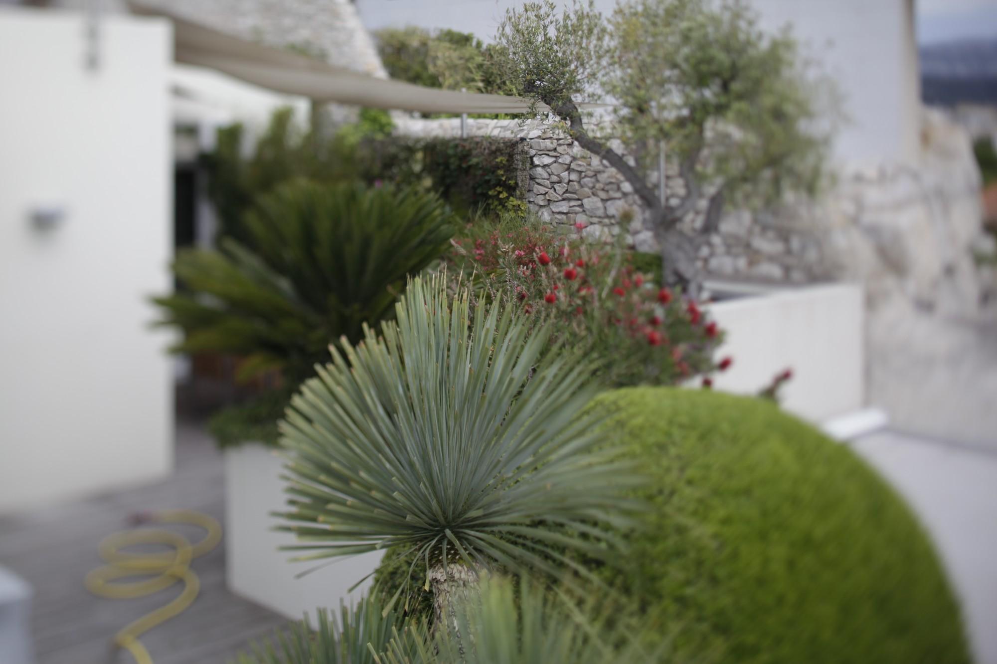 Am nagement jardins entretien espaces verts marseille for Entretien jardin 47